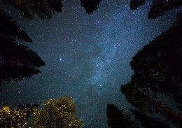 Stars trees space sky
